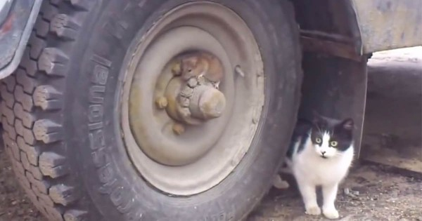 リアルトム&ジェリー?! タイヤに隠れるネズミと猫のハラハラするかくれんぼに息を呑む