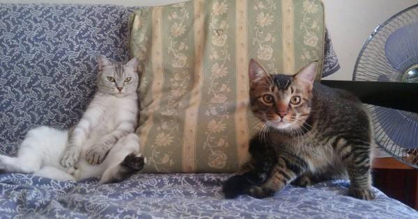 【今日のにゃんこ】何をするのも一緒な仲良し兄弟「Dayanちゃん&Jinちゃん」