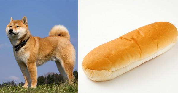 【柴犬はコッペパンである】完全に一致した犬たち10選