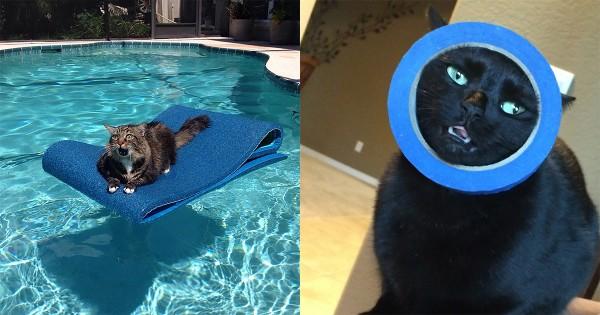 「我が人生に悔いあり!」ネコが自分の行動を後悔した瞬間16選