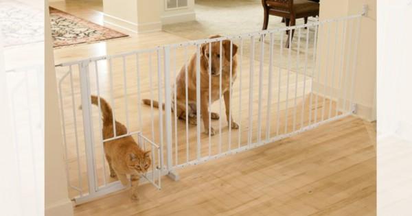 犬は猫に不満があるとわかる12の証拠