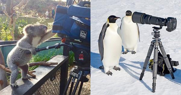 止まらない好奇心!動物とカメラの相性は抜群だと分かる12の証拠