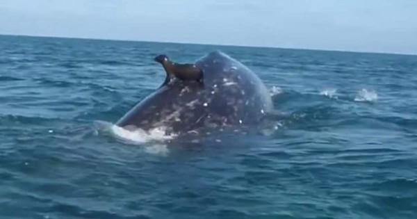 アシカ クジラ4