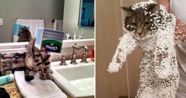 ネコには敵が多いとわかる17の証拠