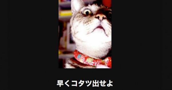 【注意キケン】職場や電車で見てはいけない猫の傑作大喜利18選