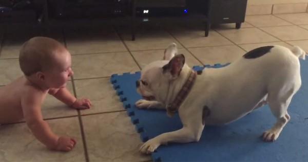 コレが犬の優しさ!赤ちゃんを笑わせようと大回転するワンコが超楽しそう