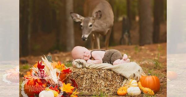 森の中で眠る赤ちゃんに近寄ってきた野生の鹿。奇跡のツーショットがおとぎ話のよう