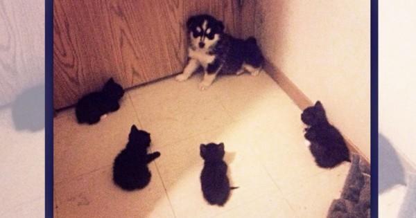 「ご主人のお気に入り」の座は渡さない。猫は犬を常に監視している(画像13枚)