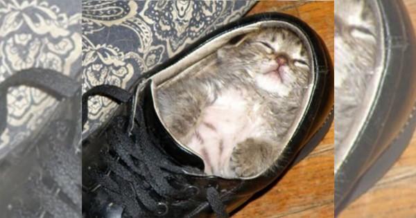 ここにもキャット、あそこにもキャット。猫は睡眠の天才である(画像20枚)