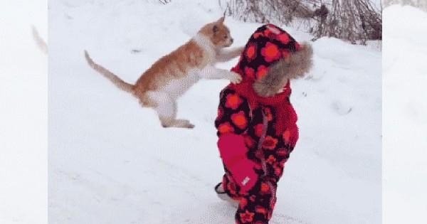 あいたた・・・。動物とたわむれる子どもたちを襲ったまさかのハプニング11選