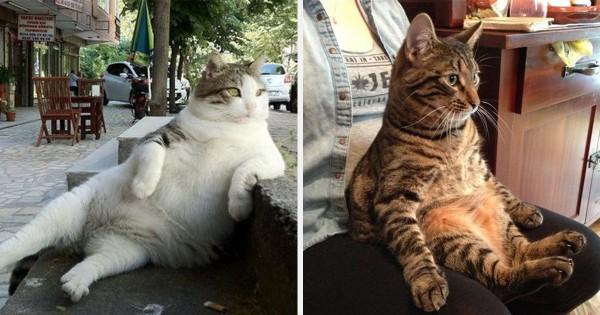 我が輩は「殿様」である。振る舞いがどこまでも偉そうな猫11選