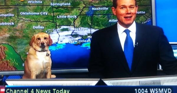 【犬がニュースキャスター!?】3秒で笑える!動物界の珍事件14選