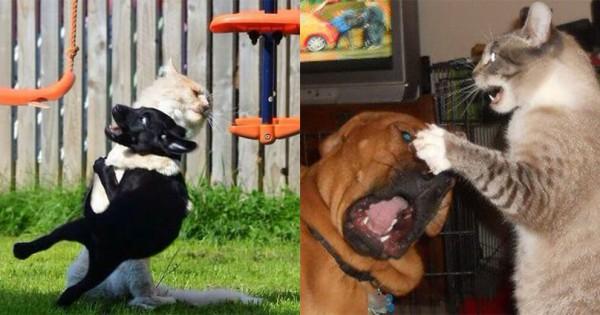 犬 VS 猫の終わりなき戦い!実は攻守ともに猫の方が一枚上手だった