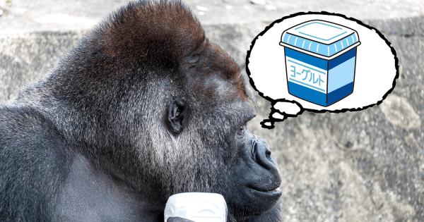 【ゴリラの大好物はヨーグルト】なんだか愛くるしい動物の「おもしろ生態」20選