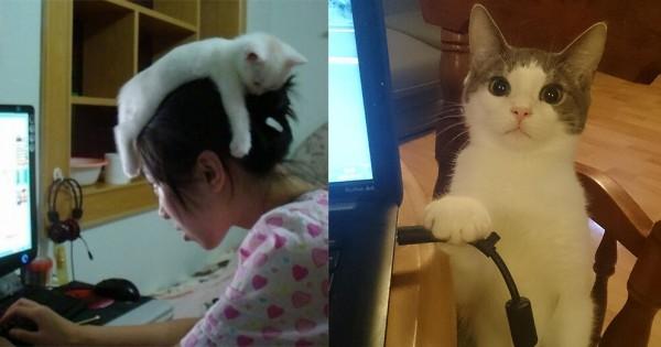 【究極のかまってちゃん】猫がいると仕事が全く進まない12選