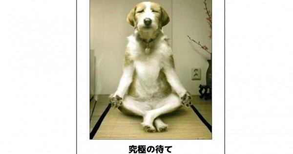 【吹いたら負け】年末へ笑ってスパートをかけられる犬のボケて15選
