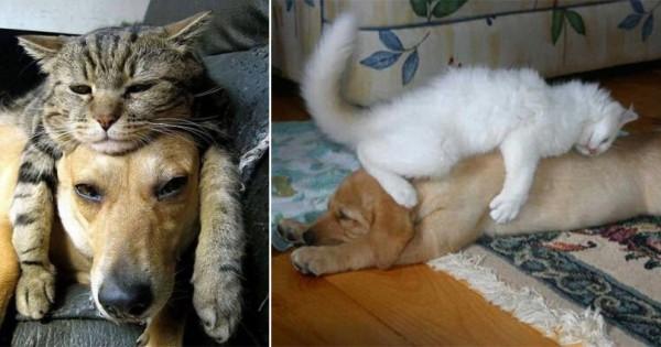 猫は犬のことを動く枕だと思っている12選