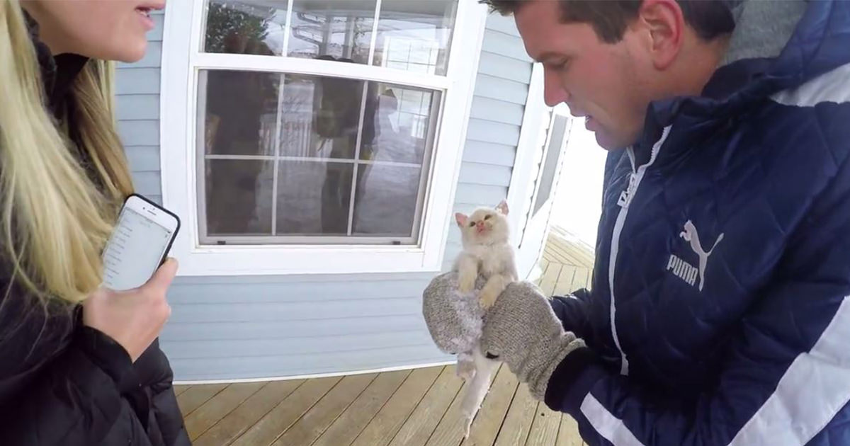 子猫 瀕死1 (1)