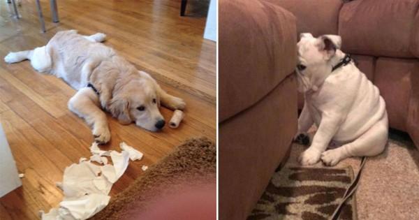 【犬好きのジレンマ】反省中の犬たちはいろいろ卑怯な気がする12選