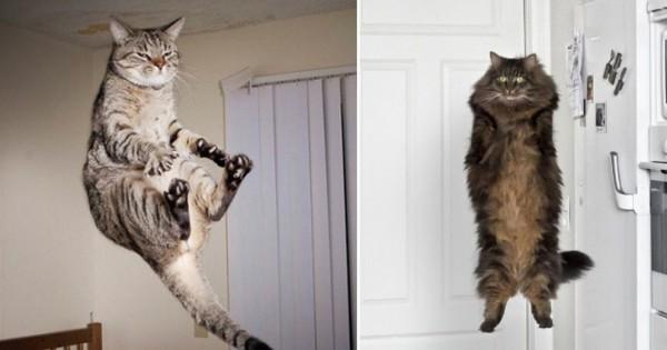 猫はたぶん空を飛べる11選