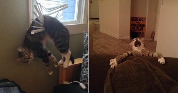 たぶん猫はめっちゃドジである12選
