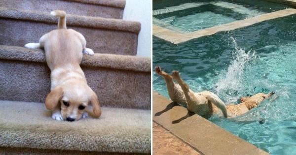 野生の勘どこいった!(笑) 犬は運動が苦手である15選
