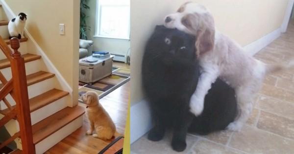猫の天敵が判明!ワンパクな子犬たちにたじたじなニャンコ13選