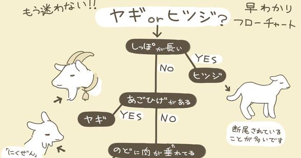 長年の疑問がコレで解決!似ているようで全く違うモノの見分け方(12選)