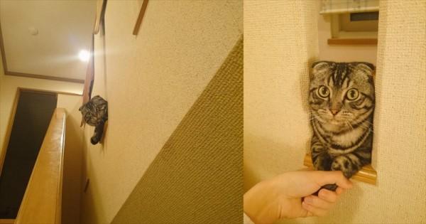 「犬みたいに気安くお手はしない!」気まぐれ猫の握手会が、どこかのアイドルみたい!