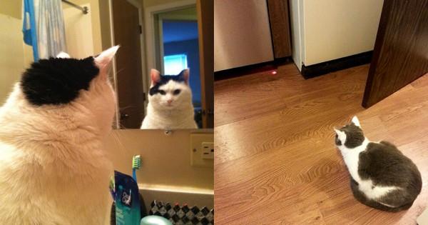 【それは残像だ】ネコは常に実体の無いものと戦っている13選