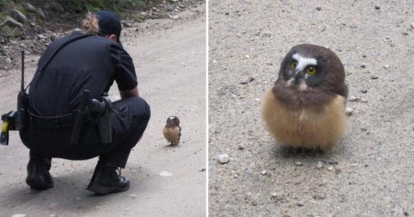 【警官とも楽しく会話】フクロウのコミュ力がめちゃくちゃ高いとわかる11の証拠