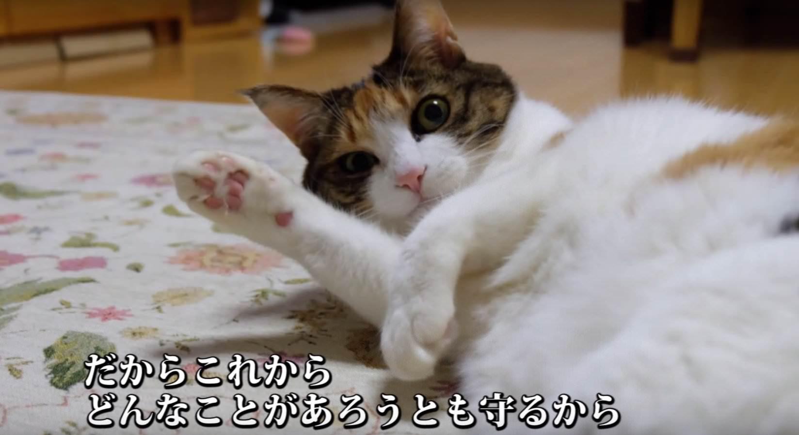 犬猫 PR 8