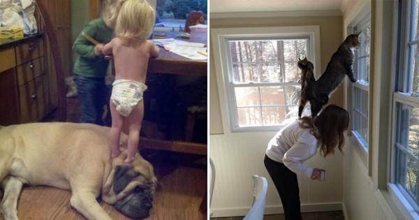 【ご主人は見た!】些細な日常からにじみ出る犬とネコの大きな違い13選