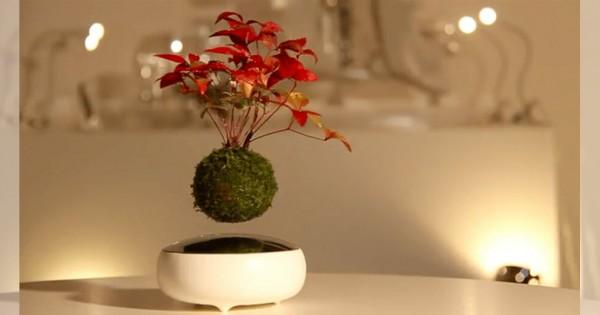 伝統とテクノロジーの融合!宙に浮かぶ盆栽がクールすぎて趣味に加えたくなる!