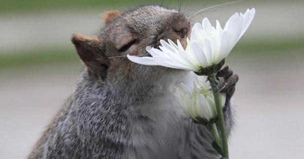 草花の香りに興味津々の動物たちを撮影したチャーミングな瞬間14選