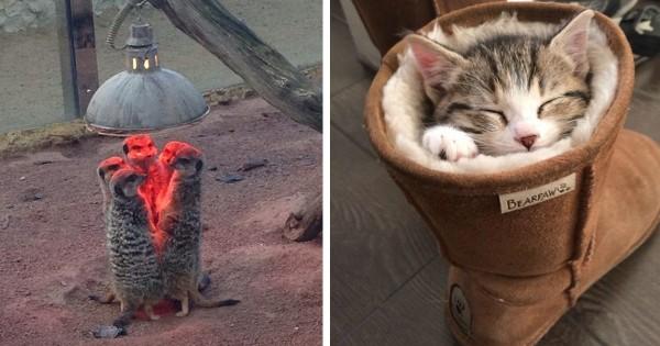 ランプの下に全員集合〜!オリジナリティに溢れた暖の取り方をする動物たち13選