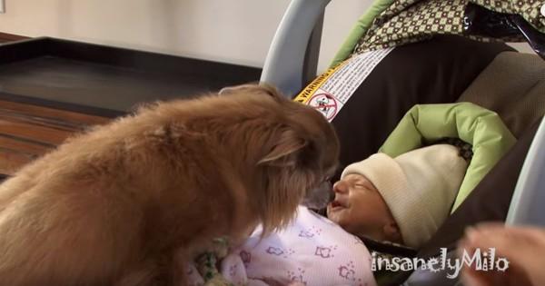 いきなり超仲良し!子供が生まれたら犬を飼いたいと思ってしまう動画
