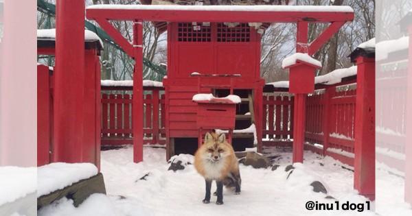 神社にお狐様が光臨?! マンガの世界に迷い込んだかのような驚きのエピソード9選
