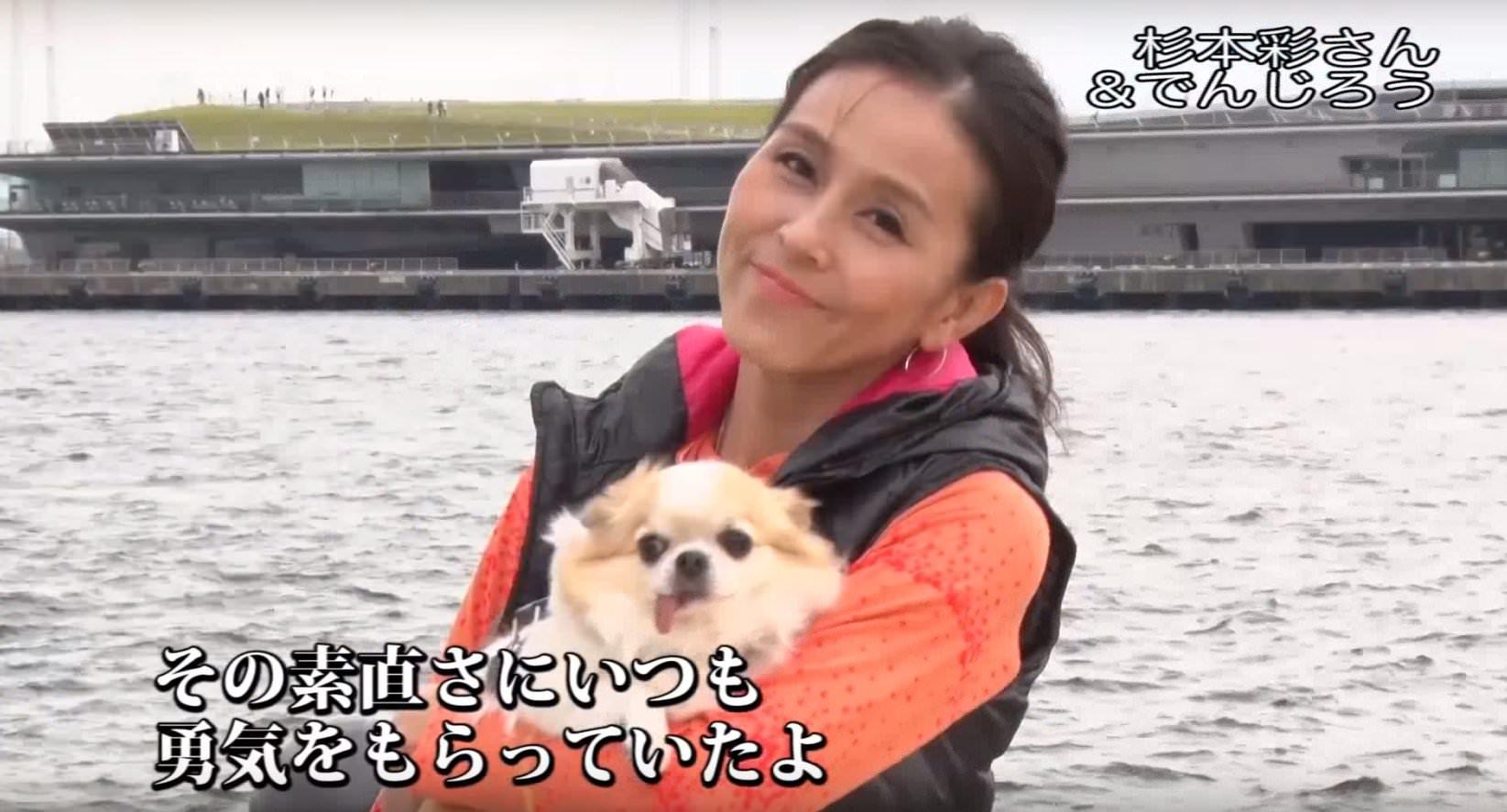 犬猫 PR 6
