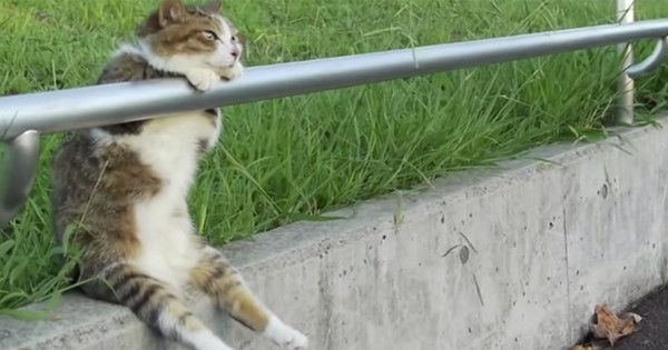 哀愁ただよう!ウトウトしながら夕暮れに黄昏れる幸せそうな猫がいた。(38秒)