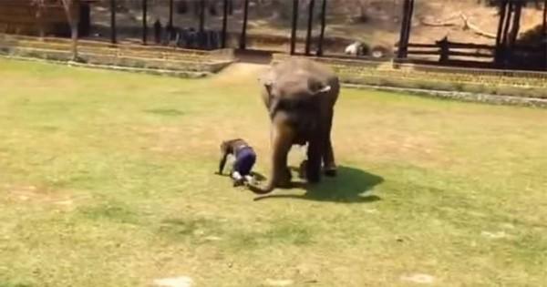 種を超えた家族愛!いきなり襲われた男性を助けるゾウの勇姿に心打たれる