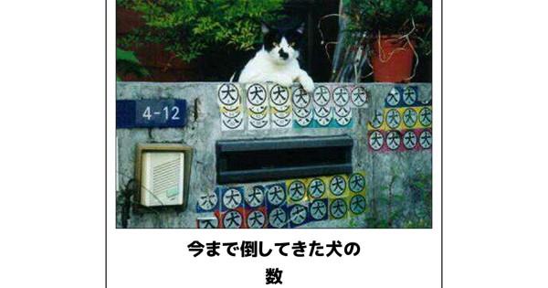 【野生の天才たち】笑いすぎ注意!センスを感じる猫のボケて12選