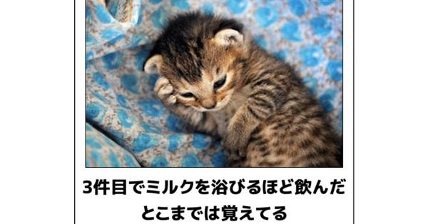 笑いで体を温めよう!腹筋を壊しに来た猫のボケて14選