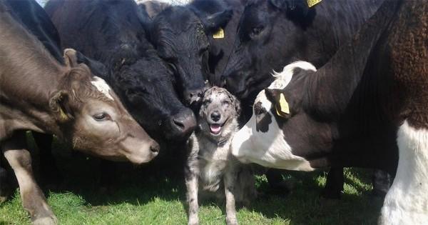 犬はどんな動物とも仲良くなれるとわかる画像9選