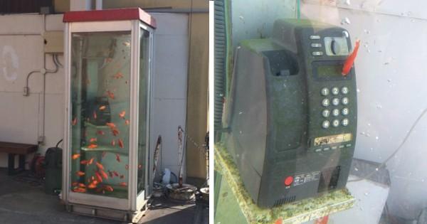 シャッター商店街が観光地に!金魚電話ボックスに観光客殺到