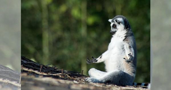 【感じるぞ・・・大地のパワーを】そろそろしゃべりだしそうな動物たち