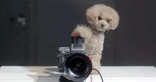 愛犬がカメラで家族を撮影?! ワンコが仕掛ける素敵なサプライズ