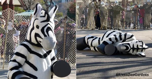 パンダもビックリ?! 上野動物園の捕獲訓練がシュール過ぎる