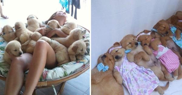 大変だけど最高に幸せな子犬とのモフモフ生活 15選