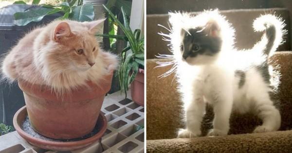 猫は光合成をして生きている15選